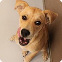 Adopt A Pet :: Bell - Bedford, TX