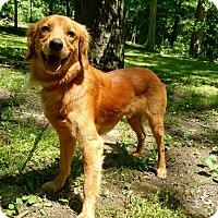 Adopt A Pet :: Jackson - Capon Bridge, WV