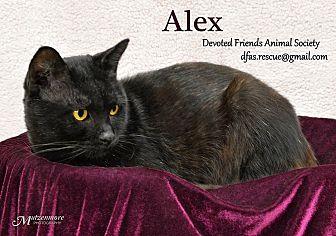 Domestic Shorthair Cat for adoption in Ortonville, Michigan - Alex