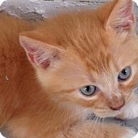 Adopt A Pet :: Solace - Oakland Park, FL