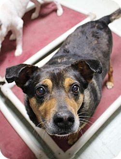 Shepherd (Unknown Type) Mix Dog for adoption in Yukon, Oklahoma - Zilli
