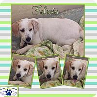 Adopt A Pet :: Felicia - Folsom, LA