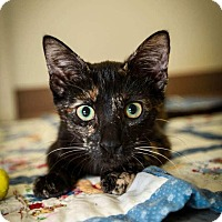Adopt A Pet :: Fox - Trevose, PA