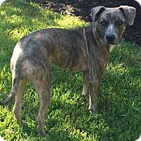 Adopt A Pet :: Maisie - Springfield, IL