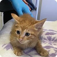Adopt A Pet :: Tic Tac - Spring, TX