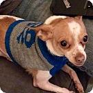 Adopt A Pet :: Rizzo