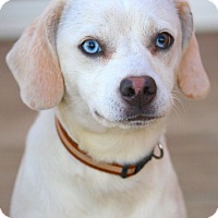 Adopt A Pet :: Sammi - Westport, CT