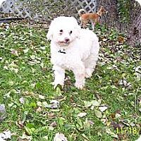 Adopt A Pet :: April - Downers Grove, IL