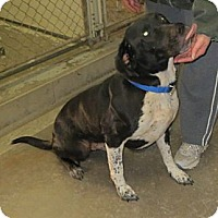 Adopt A Pet :: Spartacus - Geneseo, IL