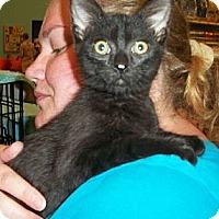 Adopt A Pet :: Nicholas - Reston, VA