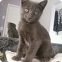 Adopt A Pet :: Slate - Monroe, GA