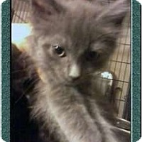 Adopt A Pet :: Arthur - Jacksonville, FL