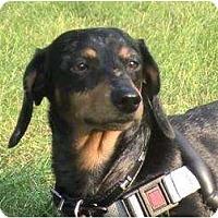 Adopt A Pet :: Grace - Toronto, ON
