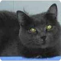 Adopt A Pet :: Gracie - Arlington, VA