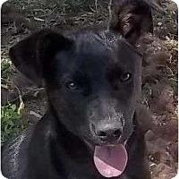 Adopt A Pet :: Stella - P, ME