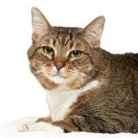 Adopt A Pet :: Mallory - Santa Monica, CA