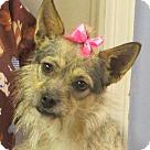 Adopt A Pet :: Phoebe