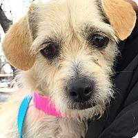 Adopt A Pet :: Mario-ADOPTION PENDING - Boulder, CO