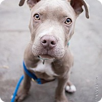 Adopt A Pet :: Enzo - Houston, TX