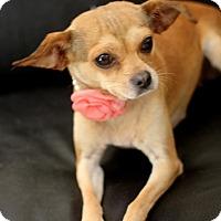 Adopt A Pet :: Beth - Dalton, GA