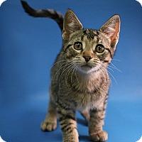 Adopt A Pet :: Leo - Overland Park, KS