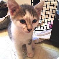 Adopt A Pet :: Kristoff - Putnam, CT