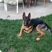 Adopt A Pet :: Maxwell - Walnut Creek, CA