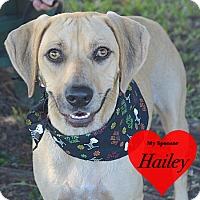 Vizsla/Black Mouth Cur Mix Dog for adoption in San Leon, Texas - Paisley