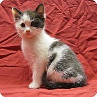 Adopt A Pet :: 16-c12-007 Jinglebell - Fayetteville, TN
