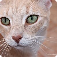 Adopt A Pet :: Tiger - Hartville, WY
