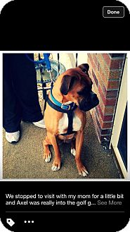 Boxer Dog for adoption in Alliance, Nebraska - Axel