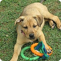 Adopt A Pet :: June - Humboldt, TN