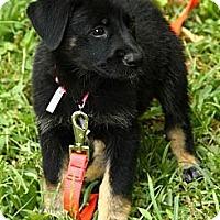 Adopt A Pet :: Elsie - Brattleboro, VT