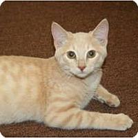 Adopt A Pet :: Franz - Racine, WI