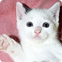 Adopt A Pet :: Becca - Xenia, OH