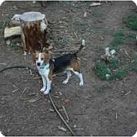 Adopt A Pet :: Rufus Ray - Phoenix, AZ
