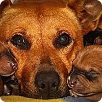Adopt A Pet :: Flo (Mama) - Atlanta, GA