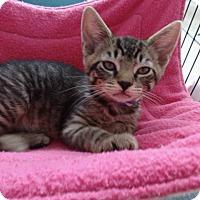 Adopt A Pet :: Aidan - Colmar, PA