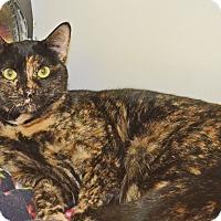 Adopt A Pet :: Henna - Lincoln, NE