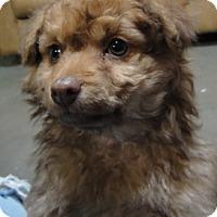 Adopt A Pet :: Mo - Meridian, ID