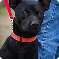 Terrier (Unknown Type, Medium) Mix Dog for adoption in Bulverde, Texas - Chuck