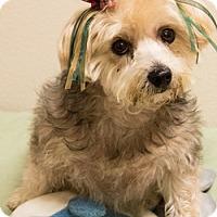 Adopt A Pet :: Sophie - Patterson, CA