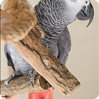 Adopt A Pet :: Danni - Denver, CO
