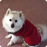 Adopt A Pet :: Eski Ralph - Westminster, MD