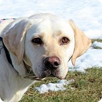 Adopt A Pet :: Lola D-68531 - Westampton, NJ