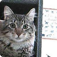 Adopt A Pet :: MAURICE - Naples, FL