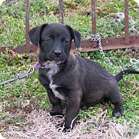 Adopt A Pet :: ARIEL - Bedminster, NJ
