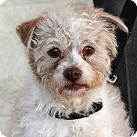 Adopt A Pet :: Jackson - Palmdale, CA