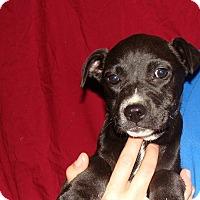 Adopt A Pet :: Exeter - Oviedo, FL