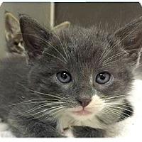 Adopt A Pet :: Junior - Springdale, AR